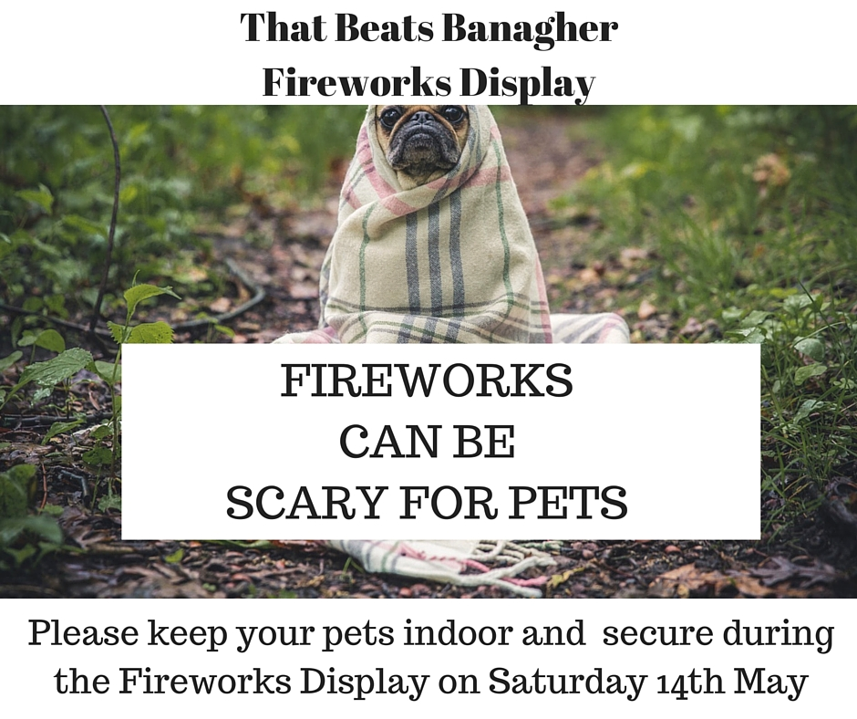 Fireworkscanbe scary for pets